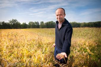 Der Biobauer Peter Schubert steht in einem Feld mit reifer Hirse, Franken