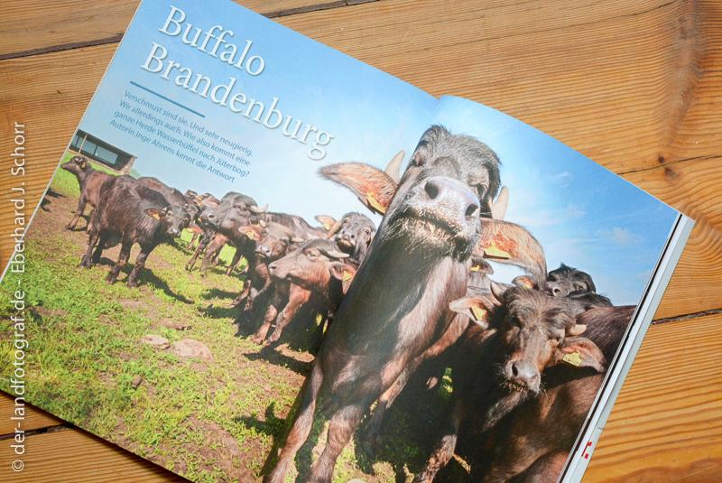Doppelseite aus dem Magazin AufsLand. Abgebildet ist eine Wasserbüffelherde