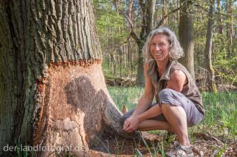 Naturpaedagogin Margot Proeckel zeigt Nagespuren eines Bibers an einer grossen Eiche