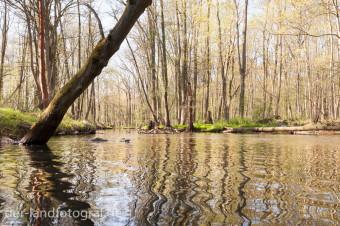 naturbelasene Auenwälder an der Havel