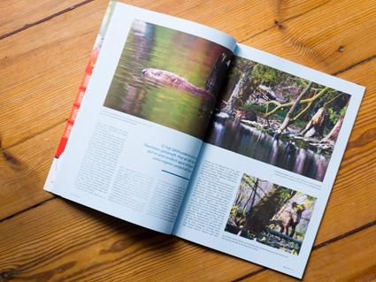 BELEG-05-Biber-der-landfotograf