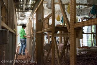 Direkt ans Haus hat Frau Lenn Volieren anbauen lassen in dem die meisten Eichhörnchen unterkommen