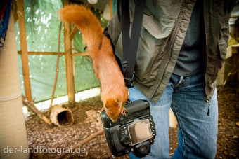 Ein Eichhörnchen inspiziert meine Kamera, die ich an einem Gurt hängen habe