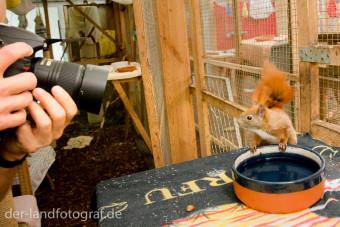 Links ich mit der Kamera, rechts das Eichhörnchen beim Fressen