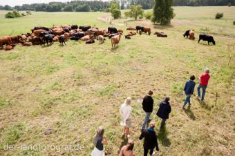 Und dann nähert sich die Gruppe wieder im Zickzack-Kurs der Herde an