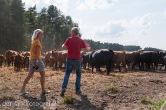 Dr. Wilhelm Schäkel gibt einer Teilnehmerin Ratschläge wie sie die Tiere treiben kann