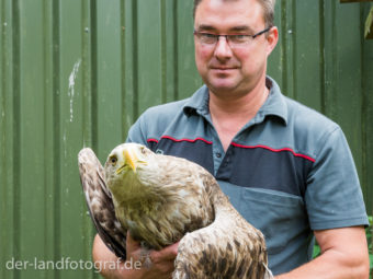 Der Leiter Falko Göbert hält einen ausgewachsenen Seeadler