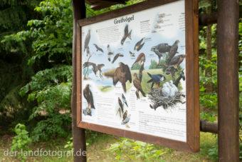 Eine Infotafel auf der alle heimischen Greifvögel abgebildet sind