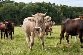 Hof Stolze Kuh