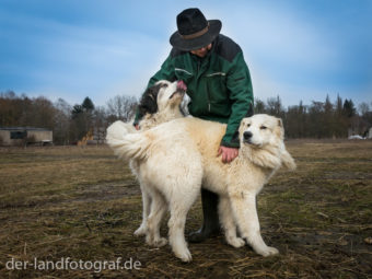 Schäfer Jürgen Körner mit zweien seiner Herdenschutzhunde