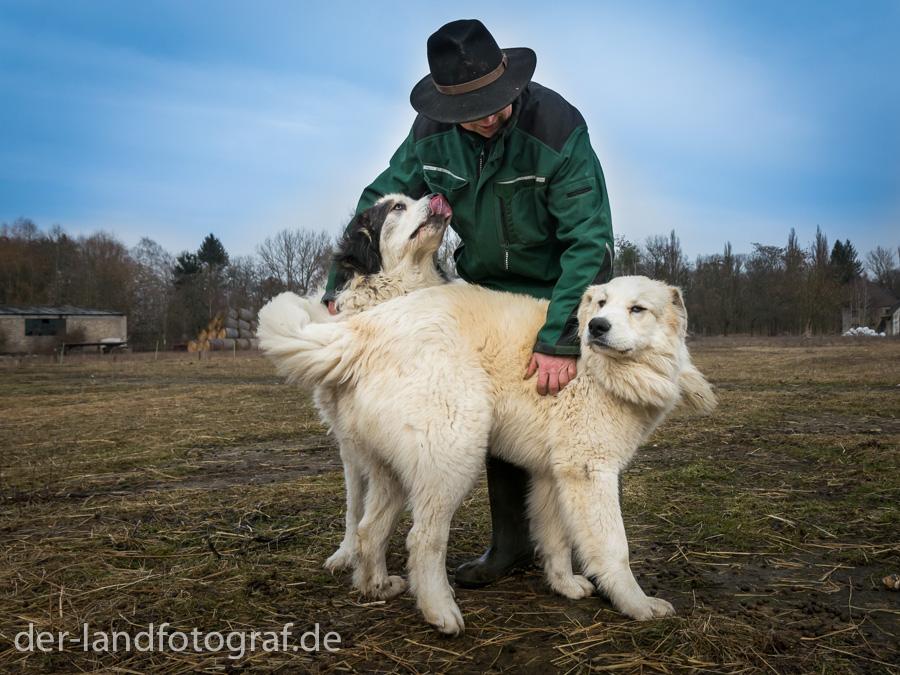 Schäfer und Herdenschutzhunde