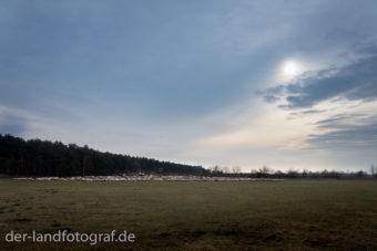 Eine Weide mit einer Schafherde bei Abendstimmung
