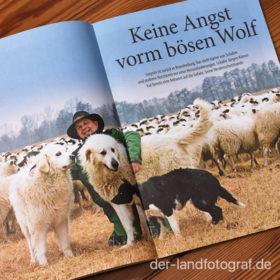 Aufmacher Herdenschutzhunde