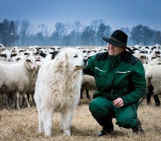 Schäfer Jürgen Körner mit einem seiner Herdenschutzhunde vor seiner Schafherde