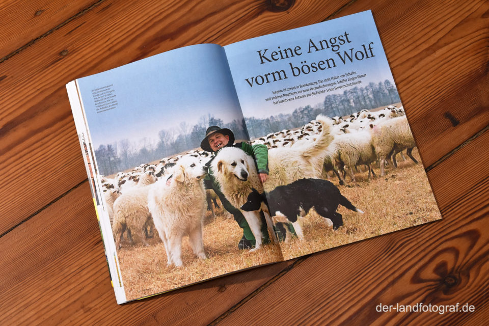 Doppelseite eines Artikels über Herdenschutzhunde im Magazin Aufs Land