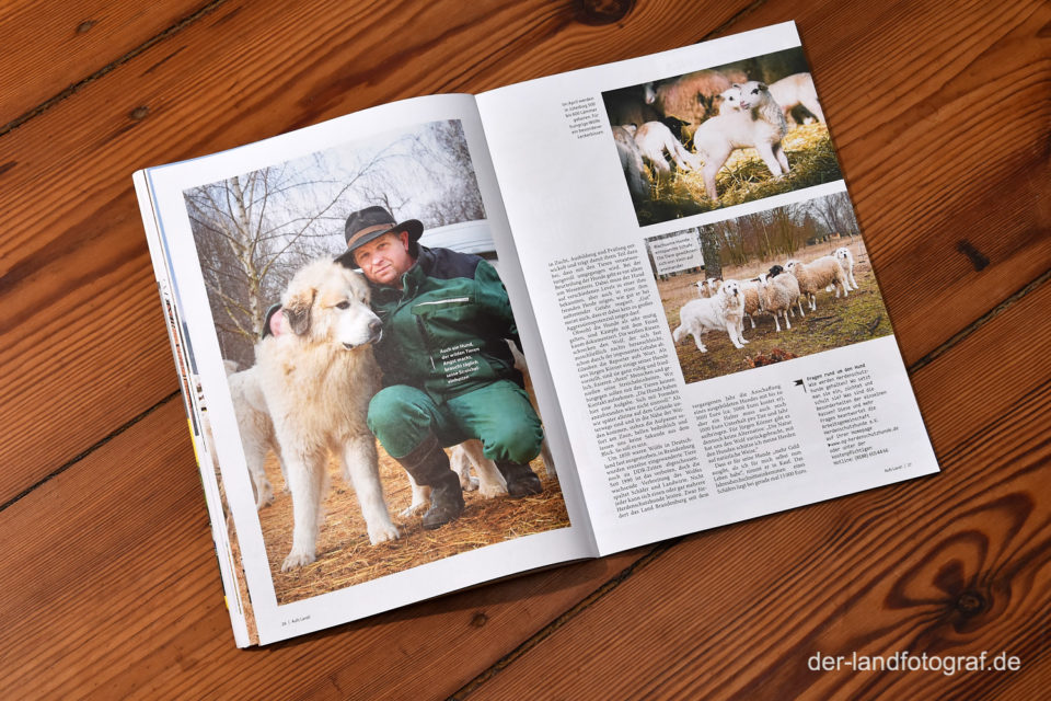 aufgeschlagene Doppelseite eines Artikels über Herdenschutzhunde