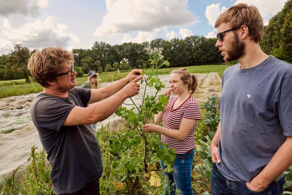 Biobauer Christian Heymann zeigt seinen Helfern ein Beikraut